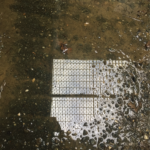 grate reflection